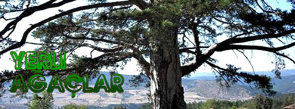 Yerli Ağaçlar